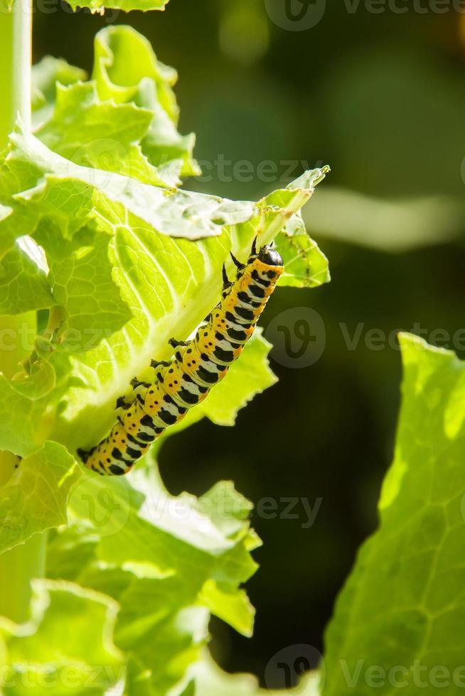 heldere kleurrijke worm foto