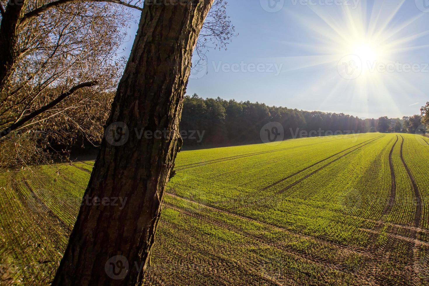 zonsondergang over het veld foto
