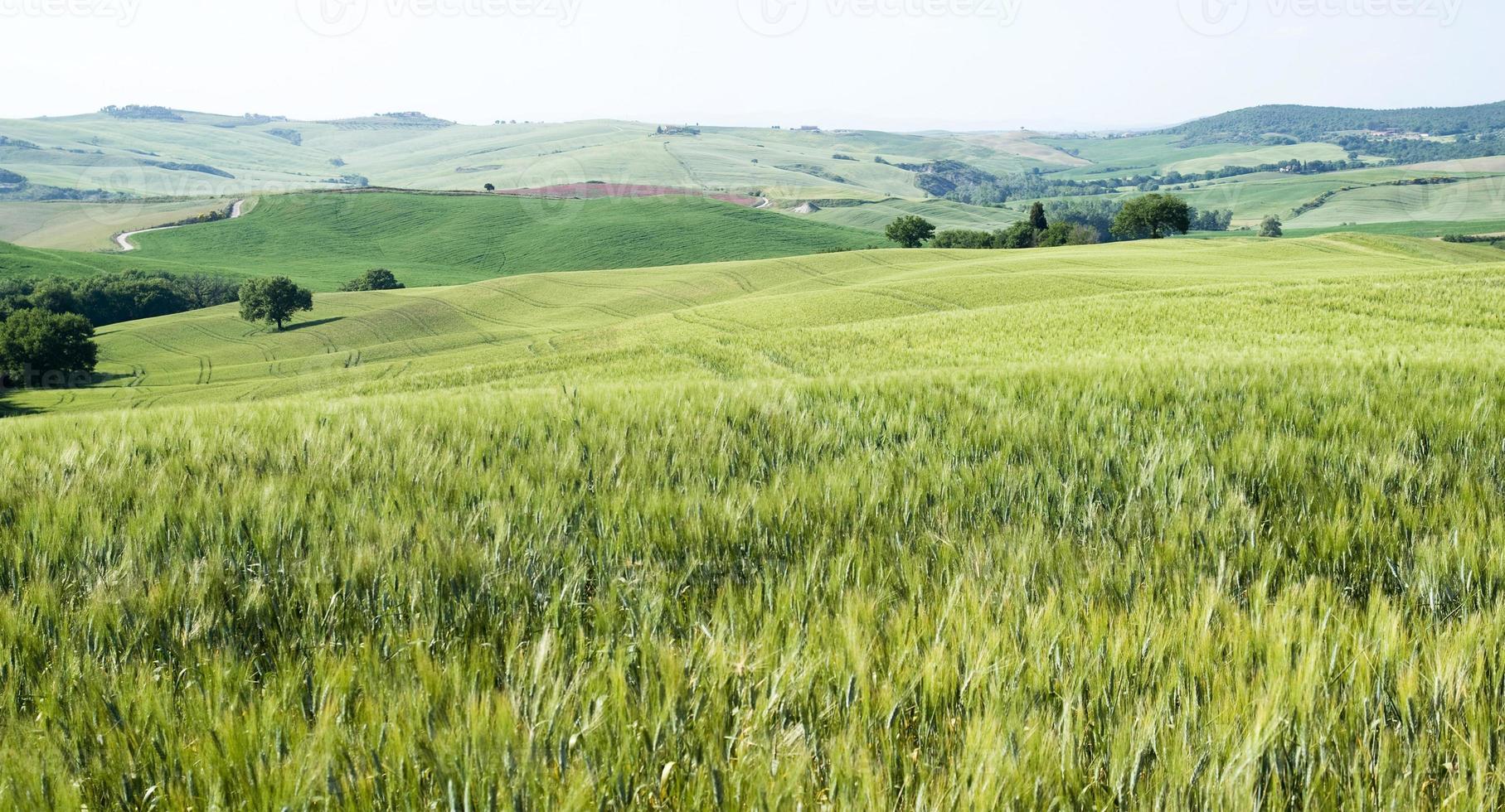 maïsvelden foto