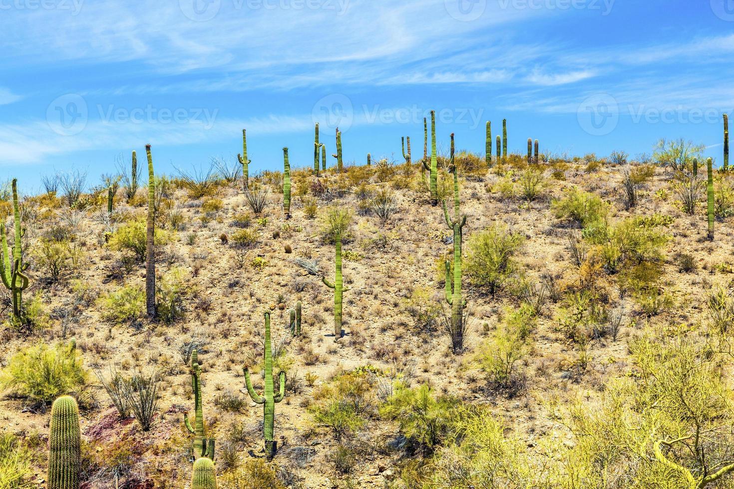 prachtige woestijn berglandschap met cactussen foto