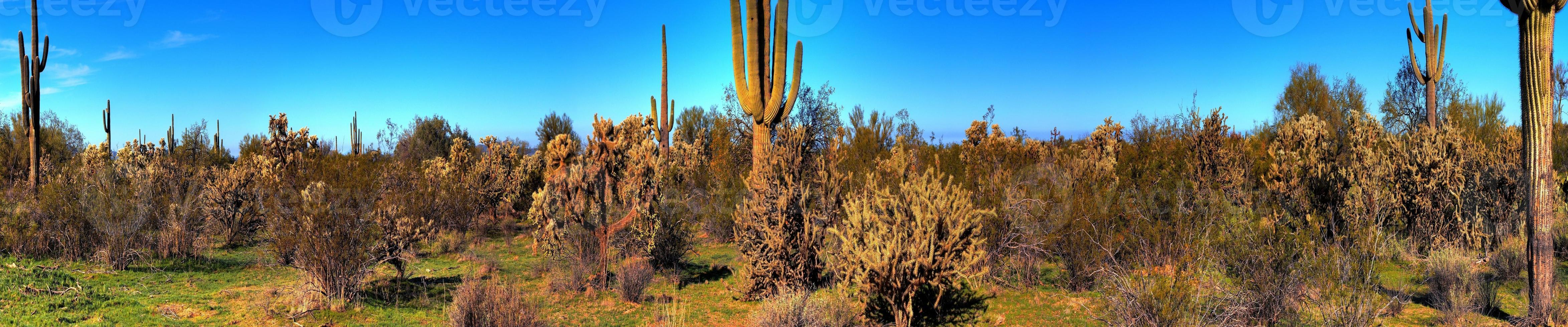 woestijn saguaro cactus panorama foto