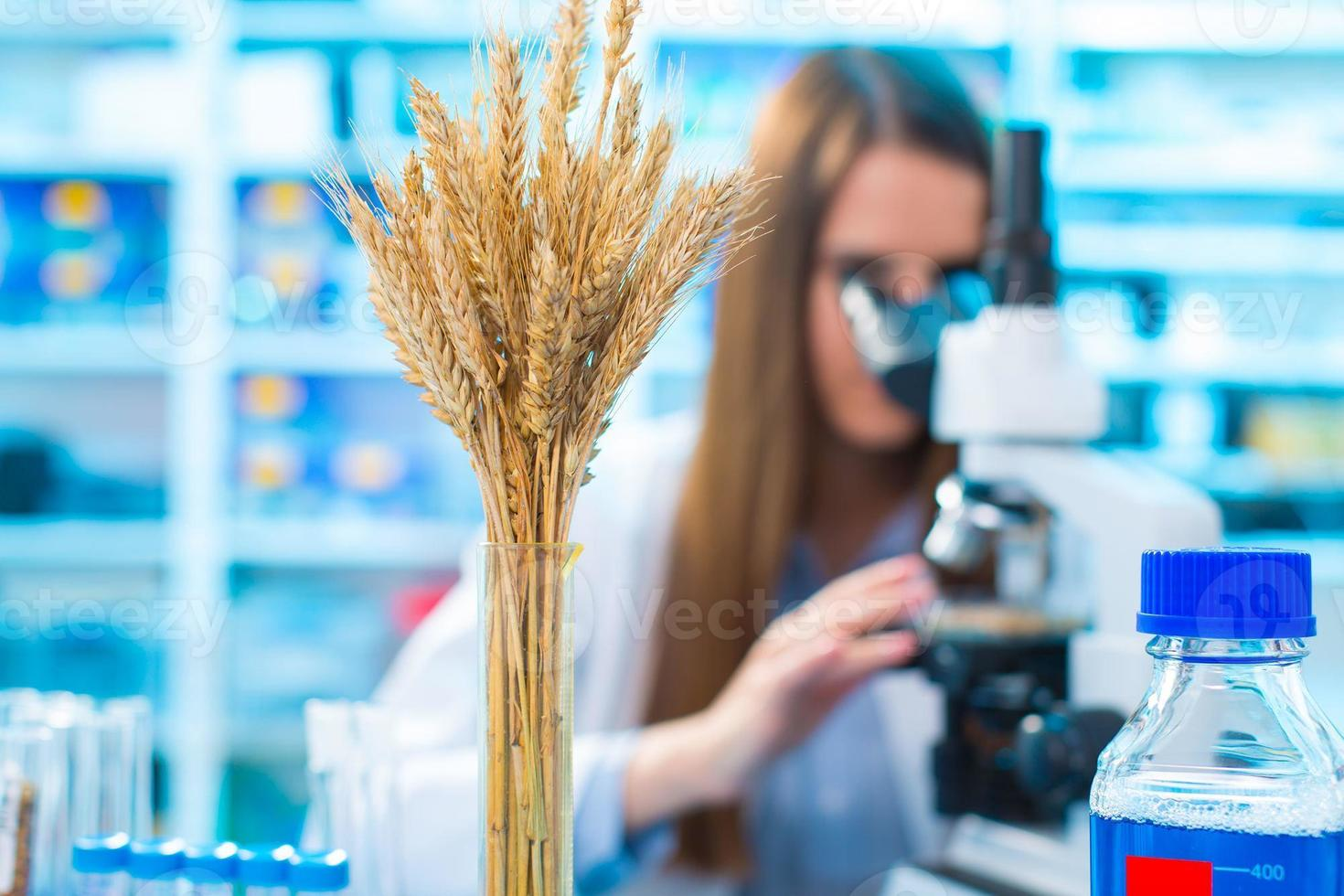 onderzoek tarwe gewassen in het laboratorium foto
