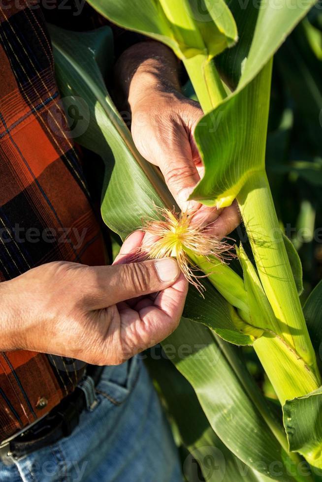 senior boer in een veld onderzoek gewas foto