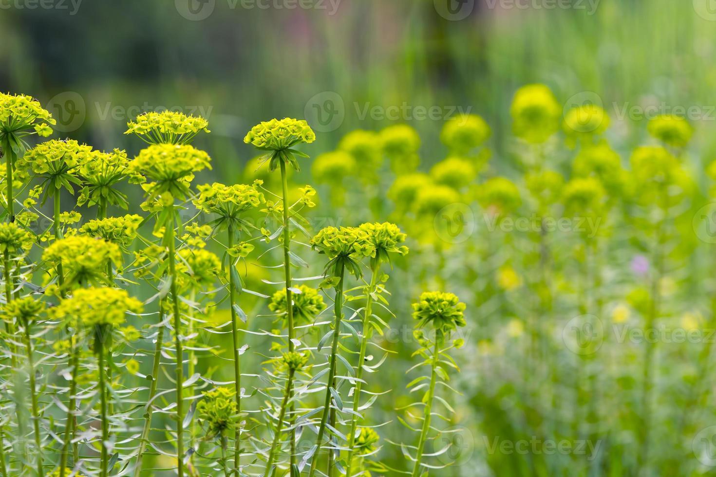 gras, bloemen foto