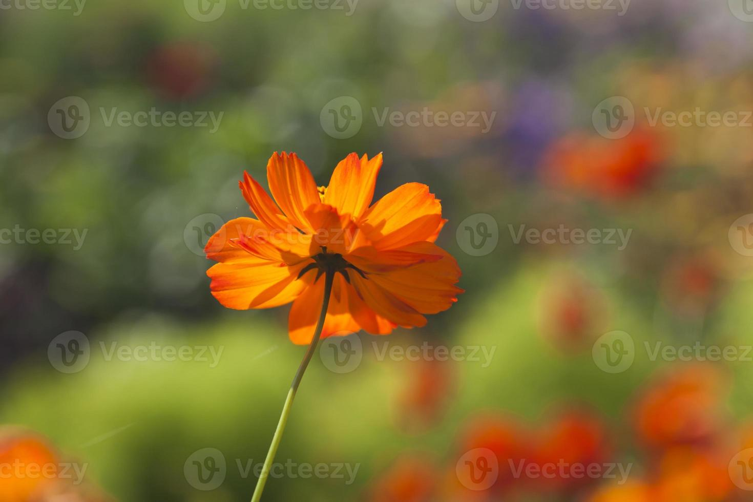 zomerbloemen foto