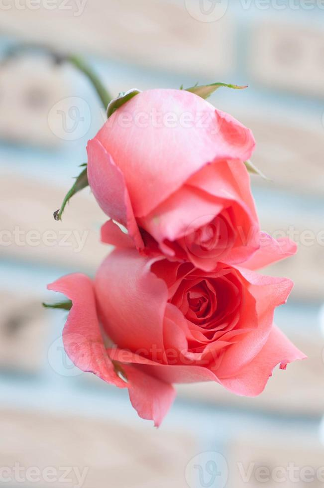 roos, Valentijnsdag foto