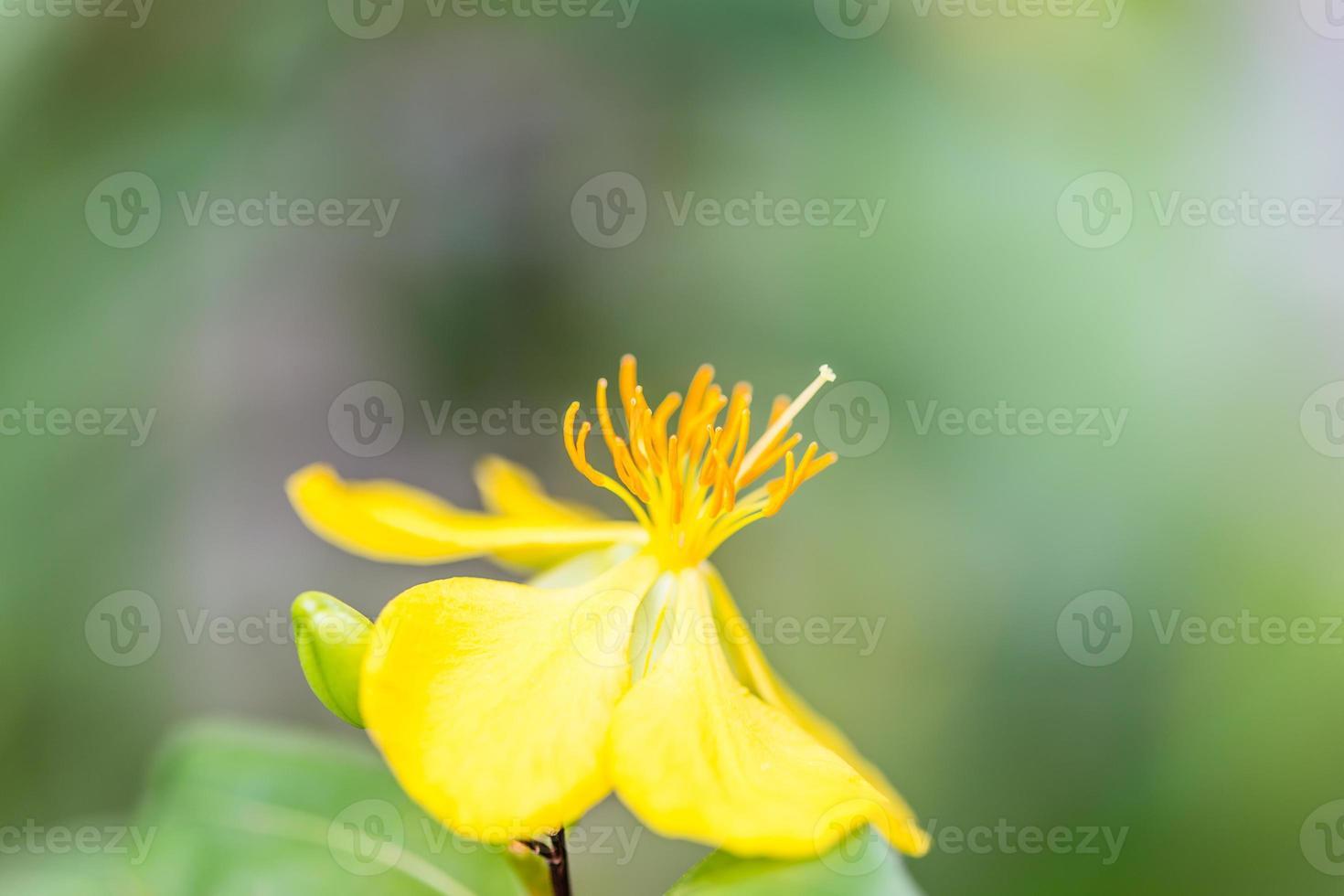 eenzame gele bloem op groen blad achtergrond foto