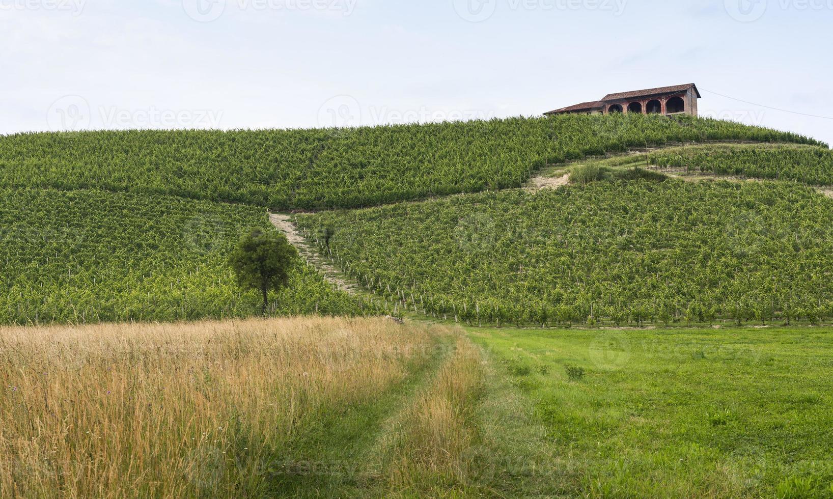 monferrato (piemonte): landschap foto
