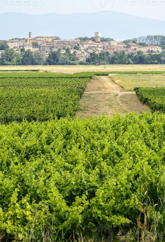 landschap nabij Carcassonne foto