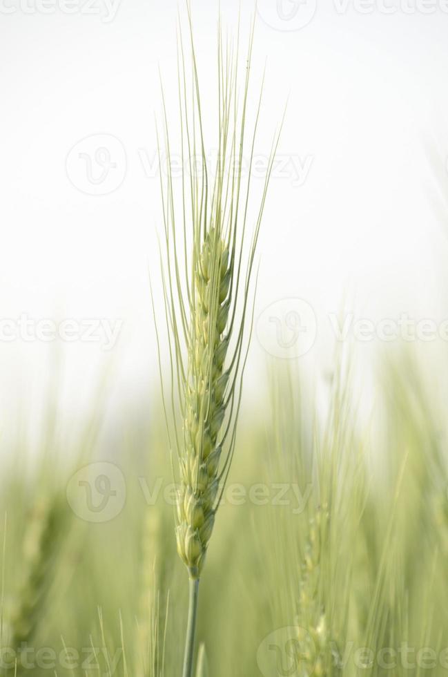 groen veldlandschap foto