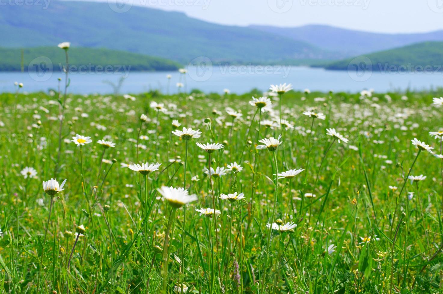 rustig landelijk landschap foto