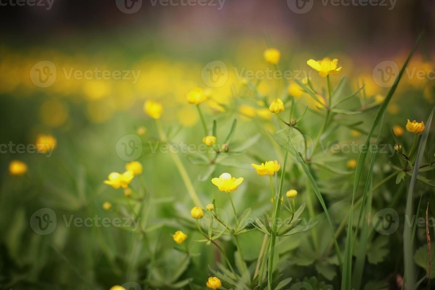 weide bloemen zomer landschap foto