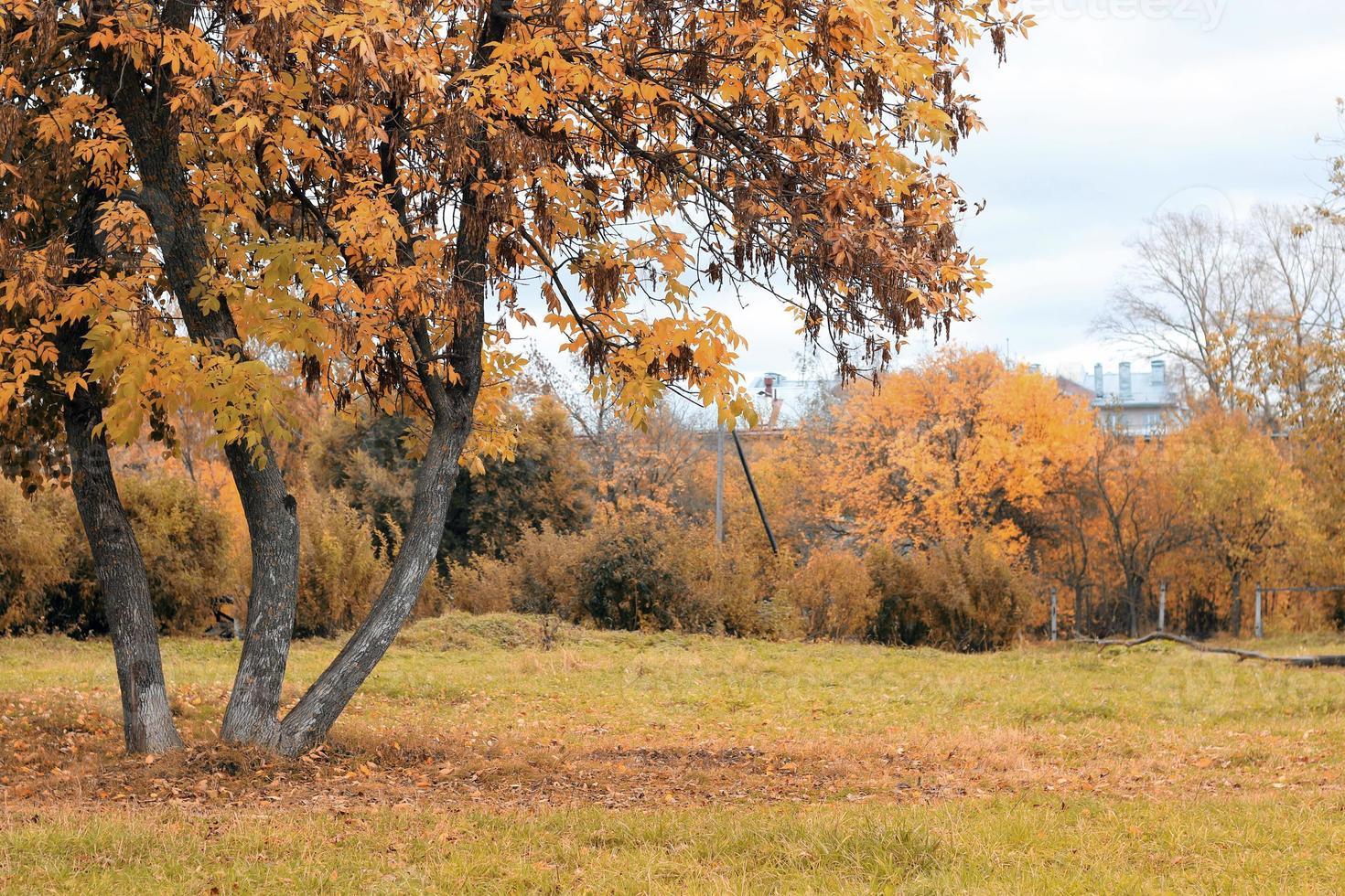 parklandschap eenzame boom foto