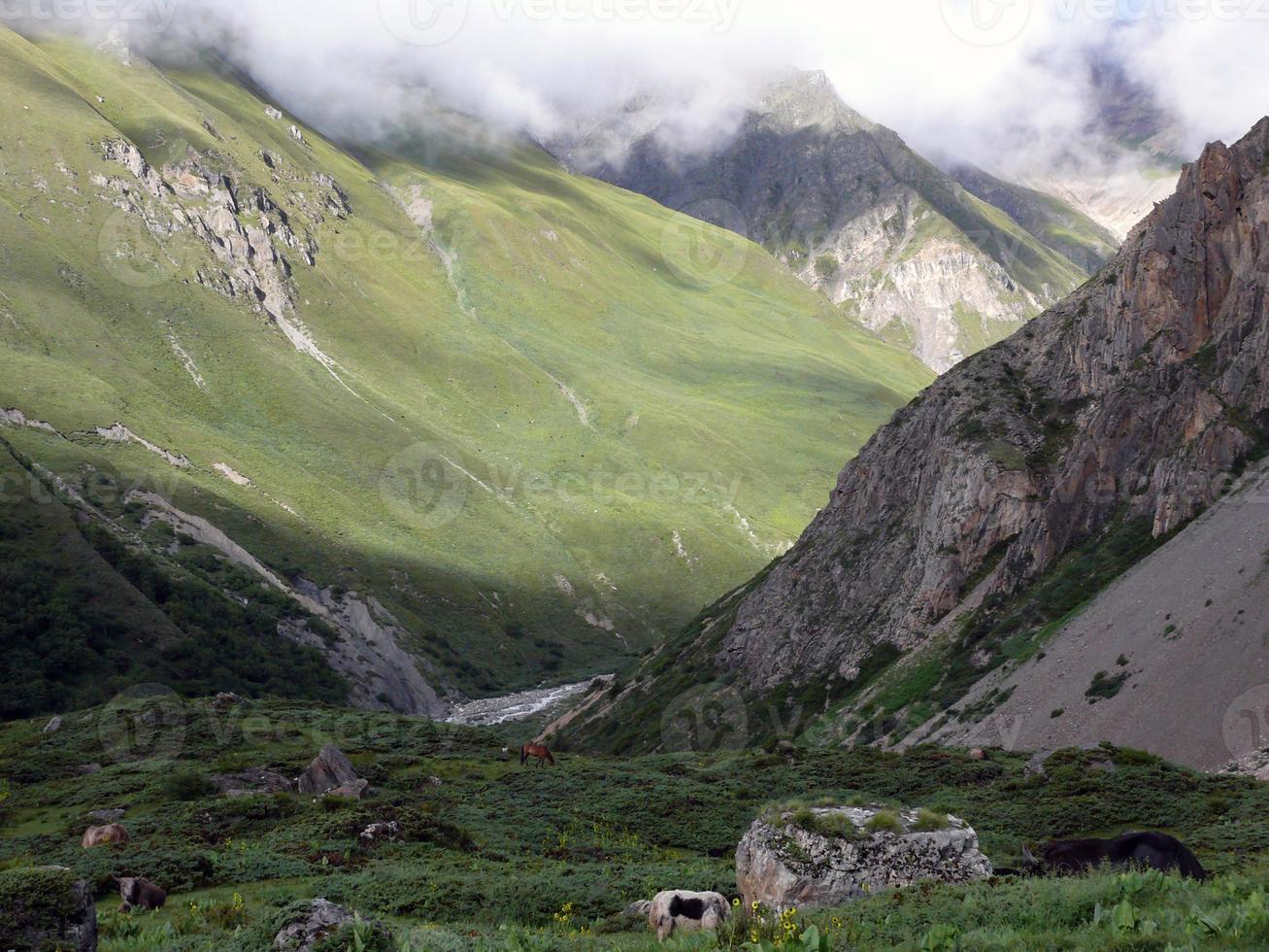 hoog Himalayaans landschap met yaks foto