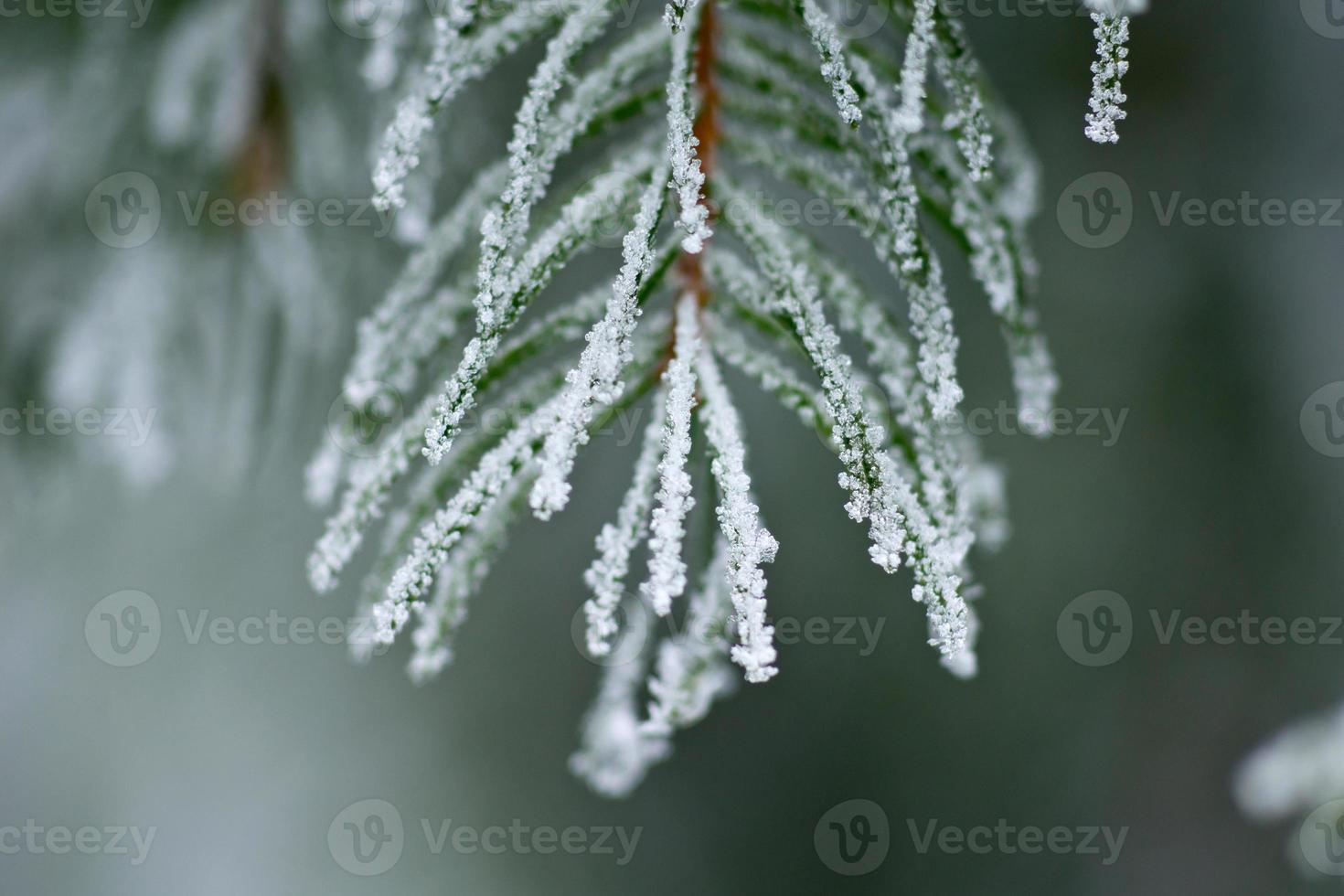 winter achtergrond foto
