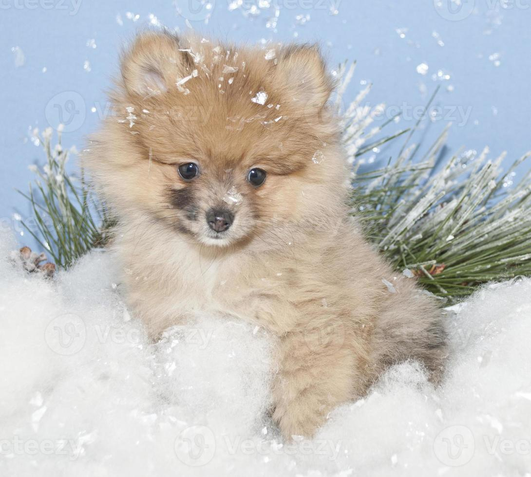 winter pom foto