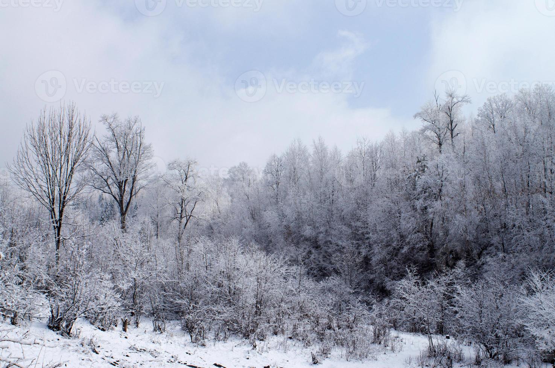 winter hout foto
