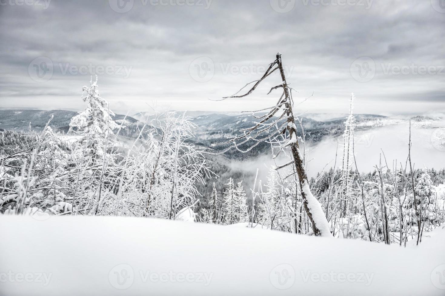 winterwandeling foto