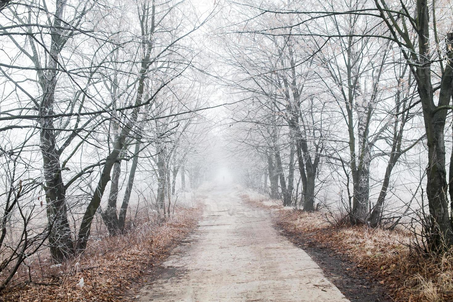 prachtige winterweg foto