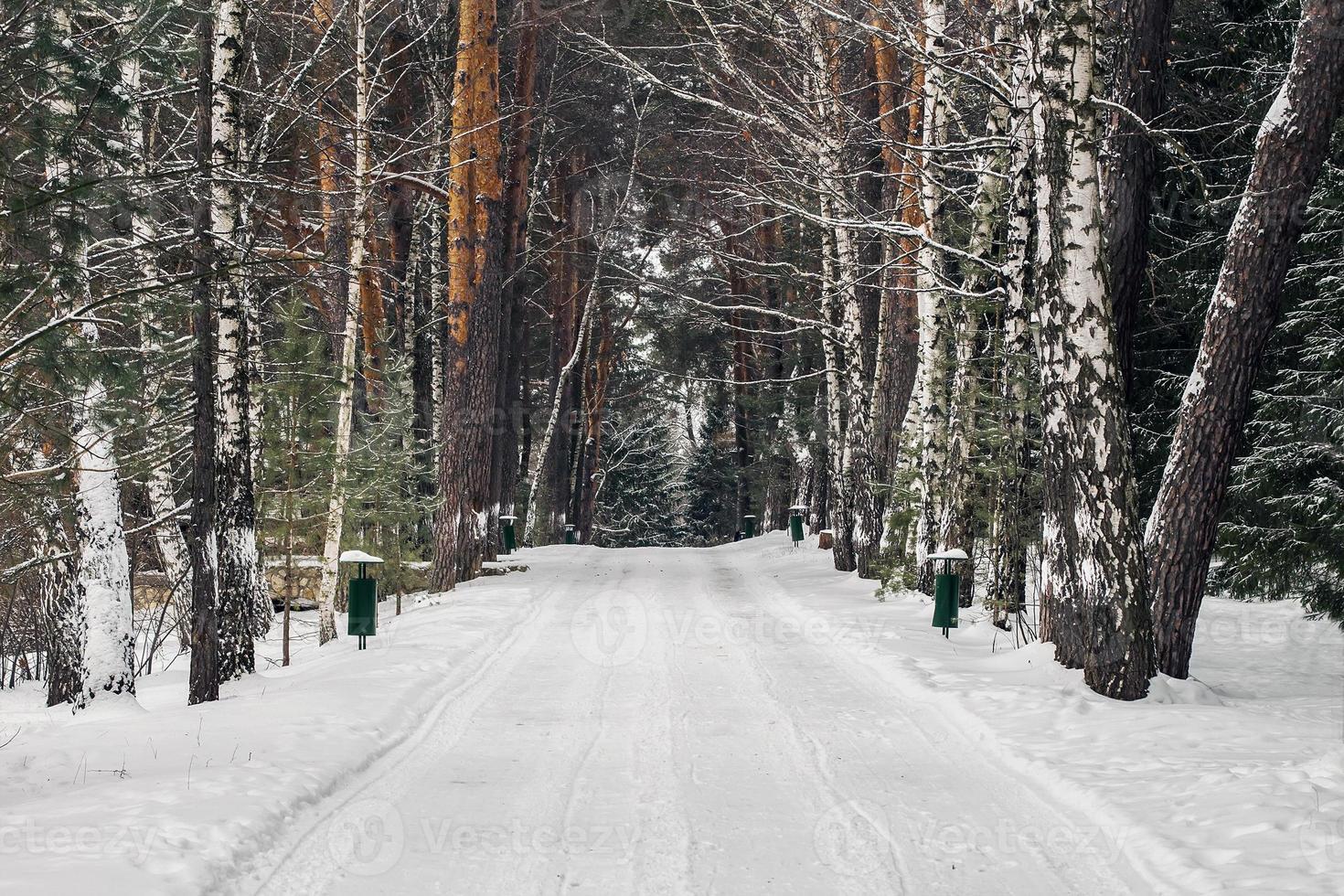 winter in polenovo park foto