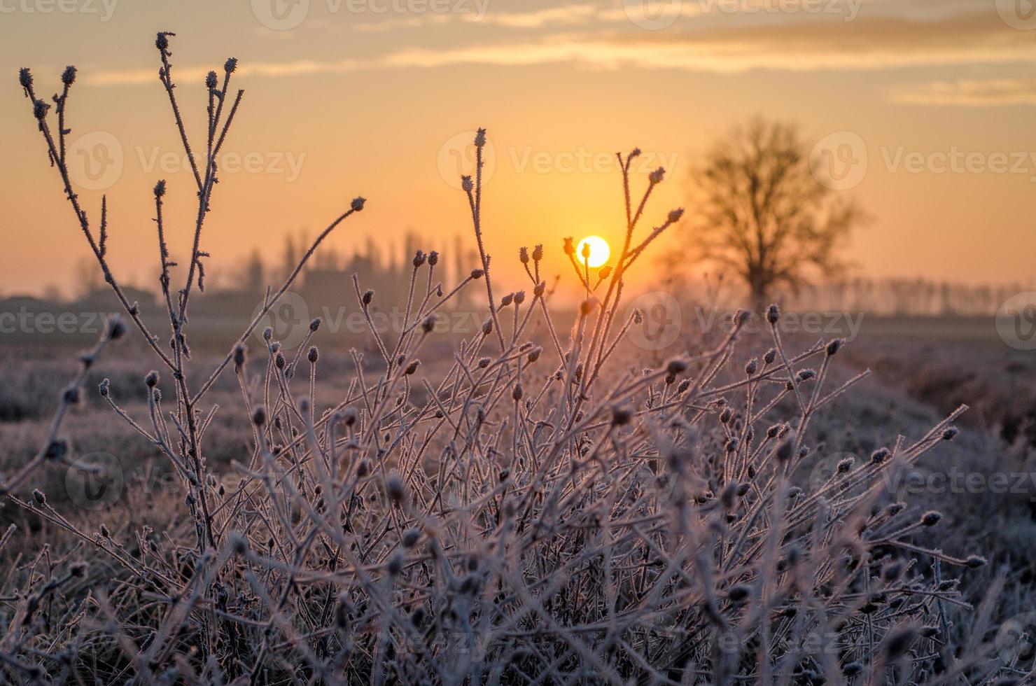 winter zonsopgang foto