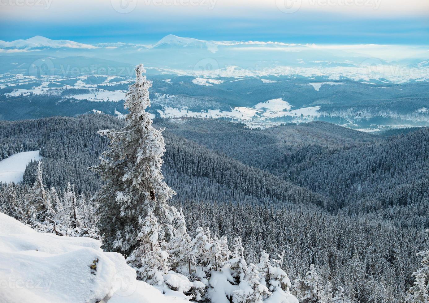 dennenboom in de winterbergen foto
