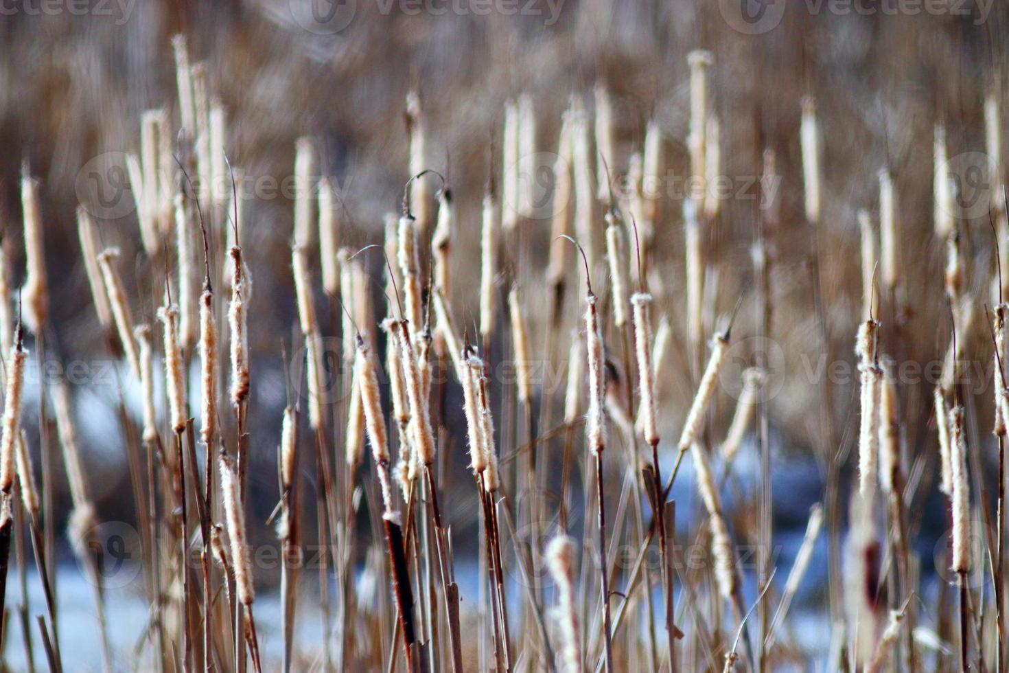zonsondergang in de winter op het moeras foto