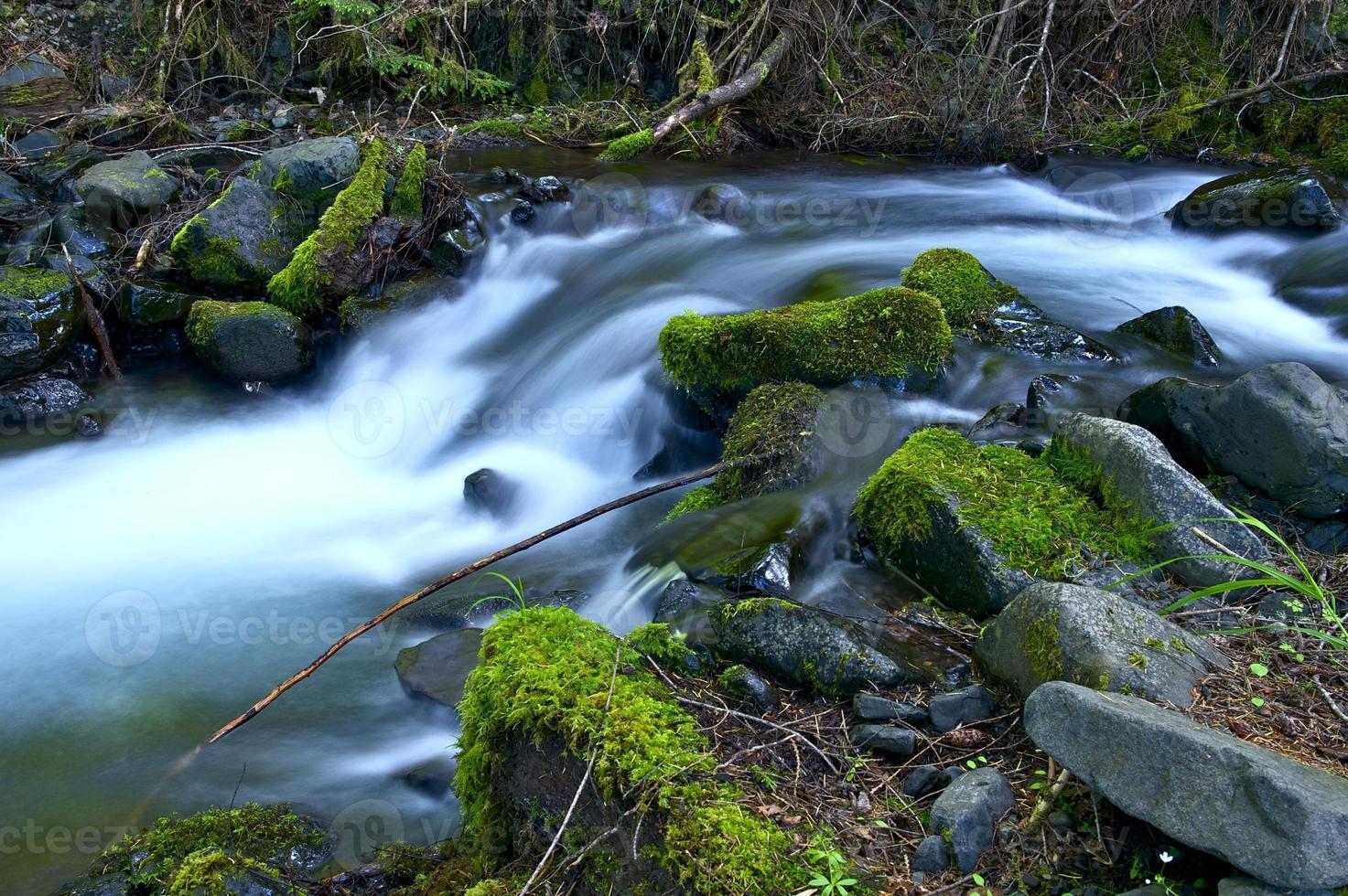 washington regenwoud foto