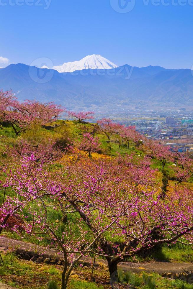 perzikboom en mt. Fuji foto