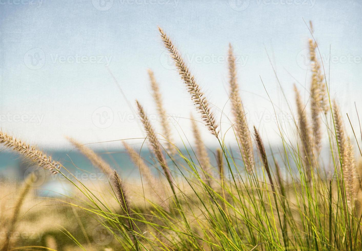 zee riet op manhattan strand foto