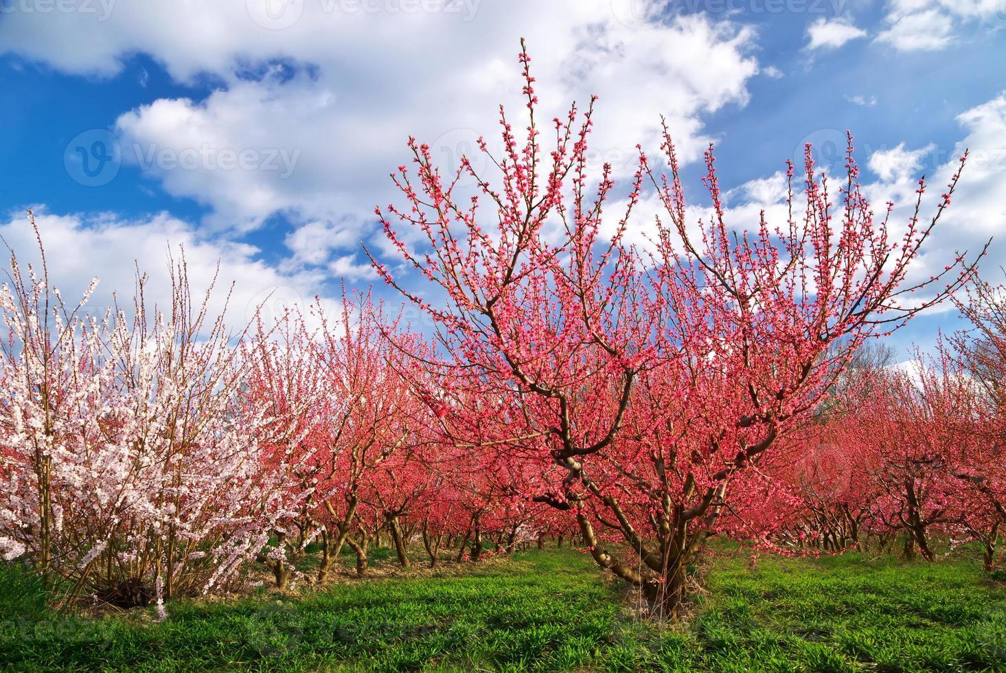 boomgaard tuin foto
