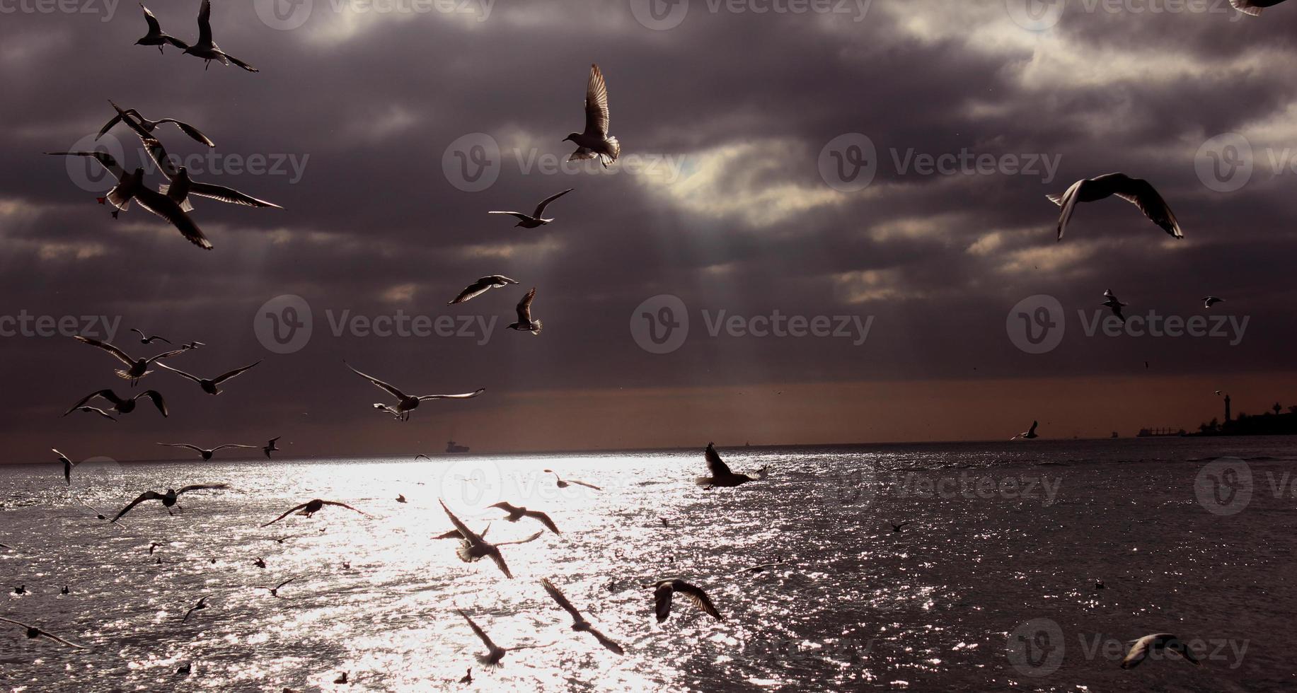 vogels dansen foto