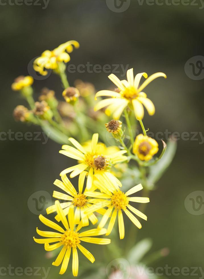 herfst wilde bloemen foto