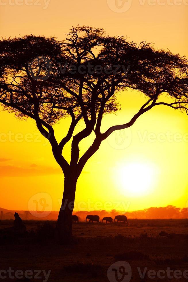 typische Afrikaanse zonsondergang foto