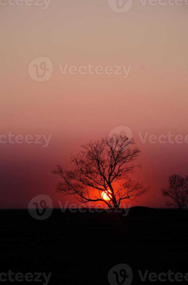 boom silhouet zonsondergang foto