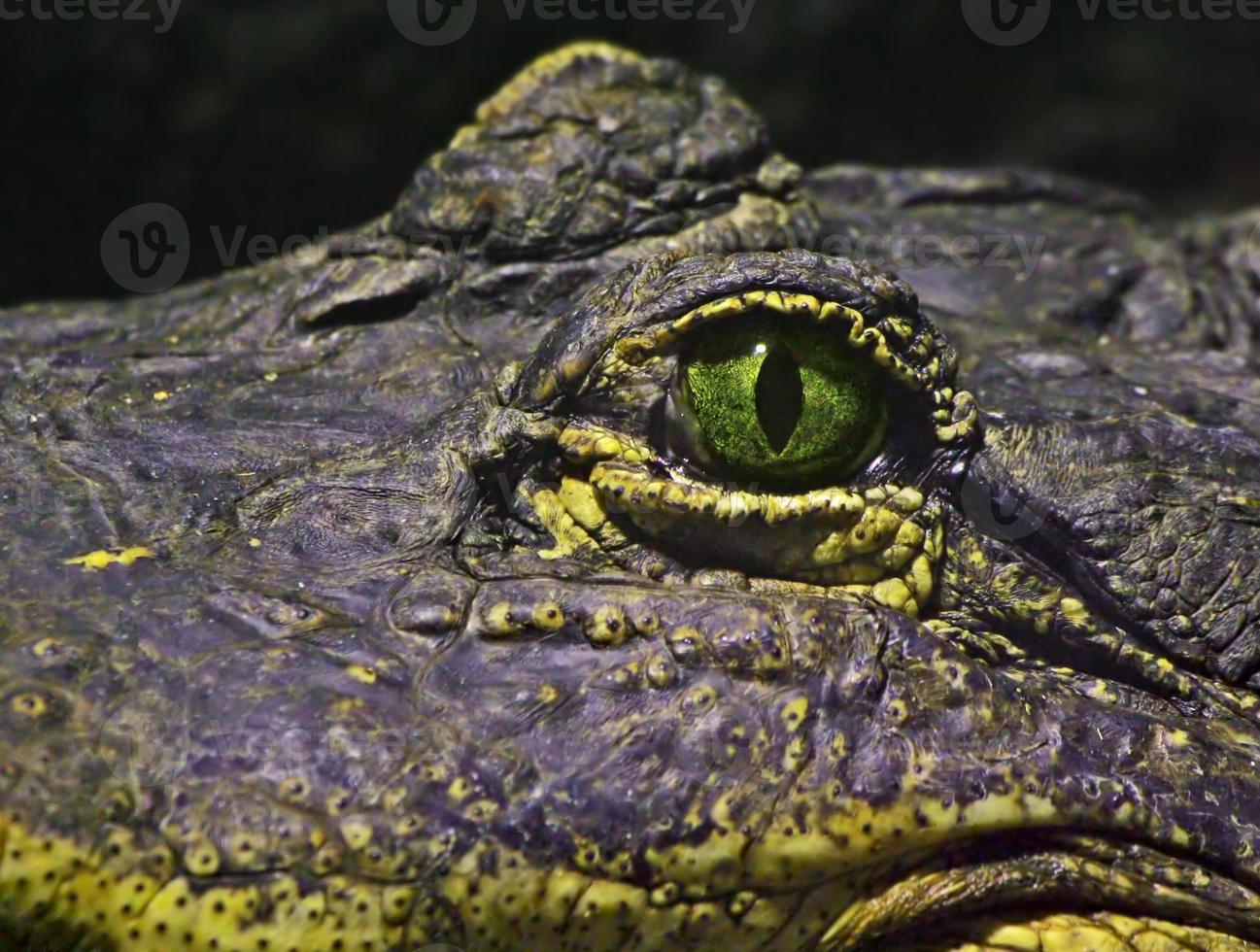 oog van een krokodil foto