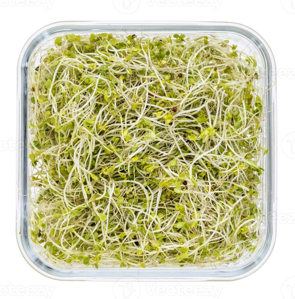 broccoli en radijsspruiten foto