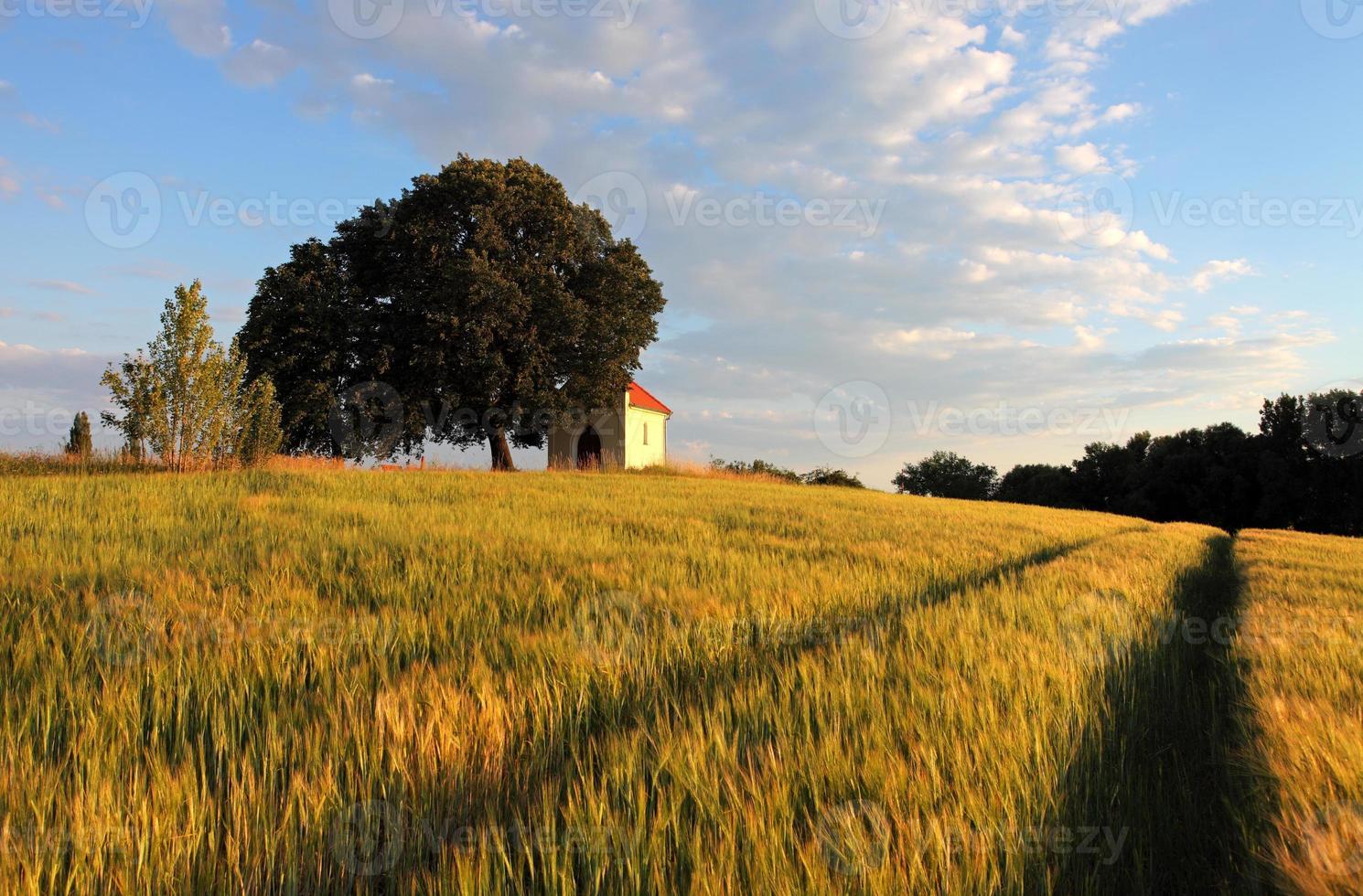 tarweveld met kapel in Slowakije foto