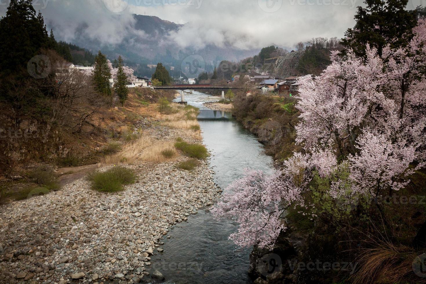 de rivier en sakura foto