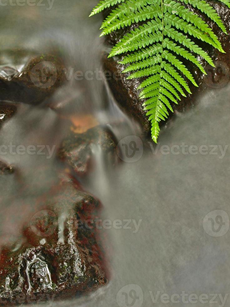 oever van de rivier onder bomen op bergrivier. foto