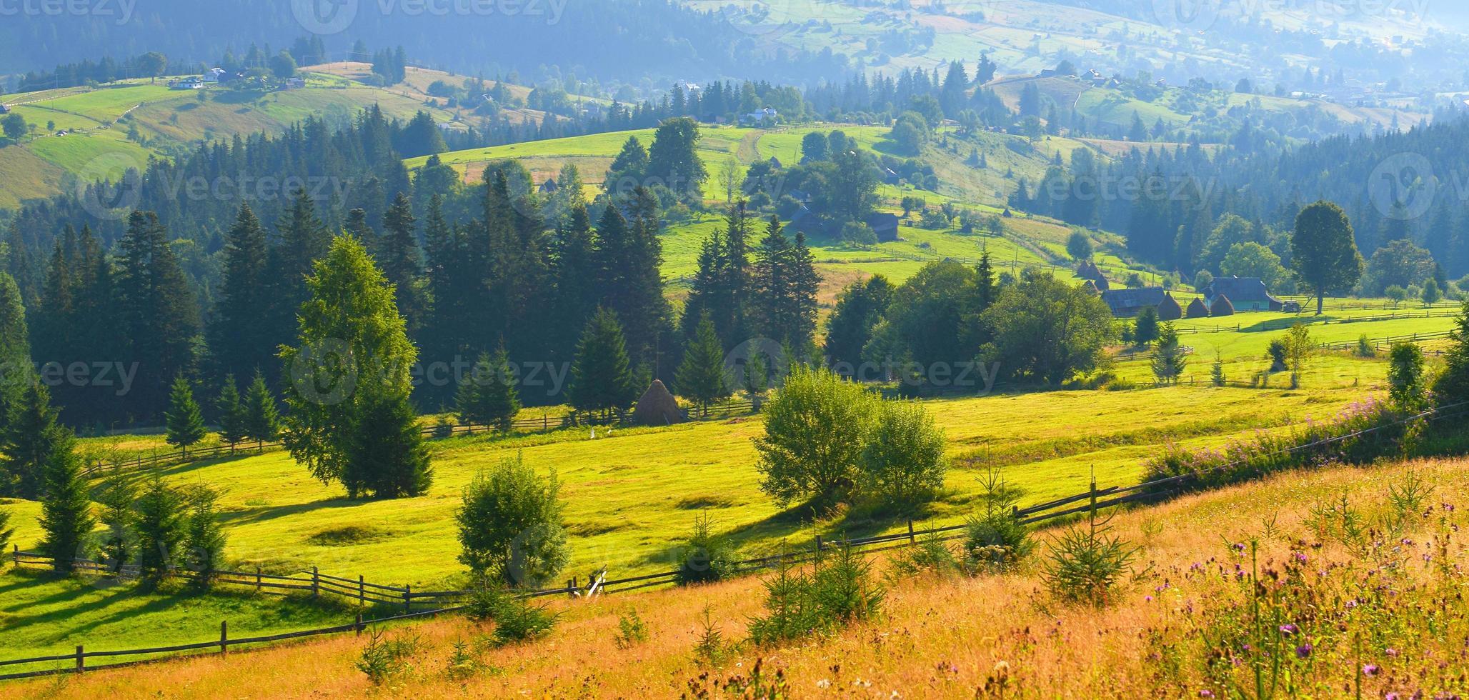 zomer platteland foto