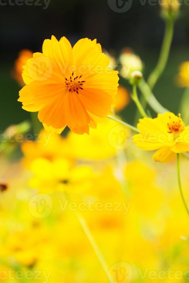gele zomerbloemen foto