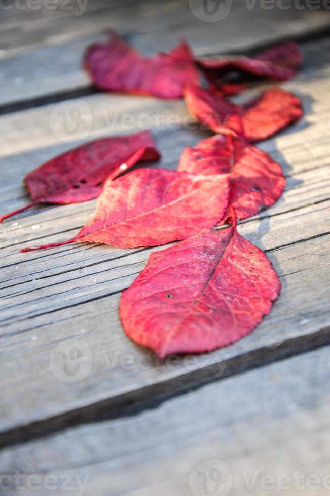 herfst bladeren foto