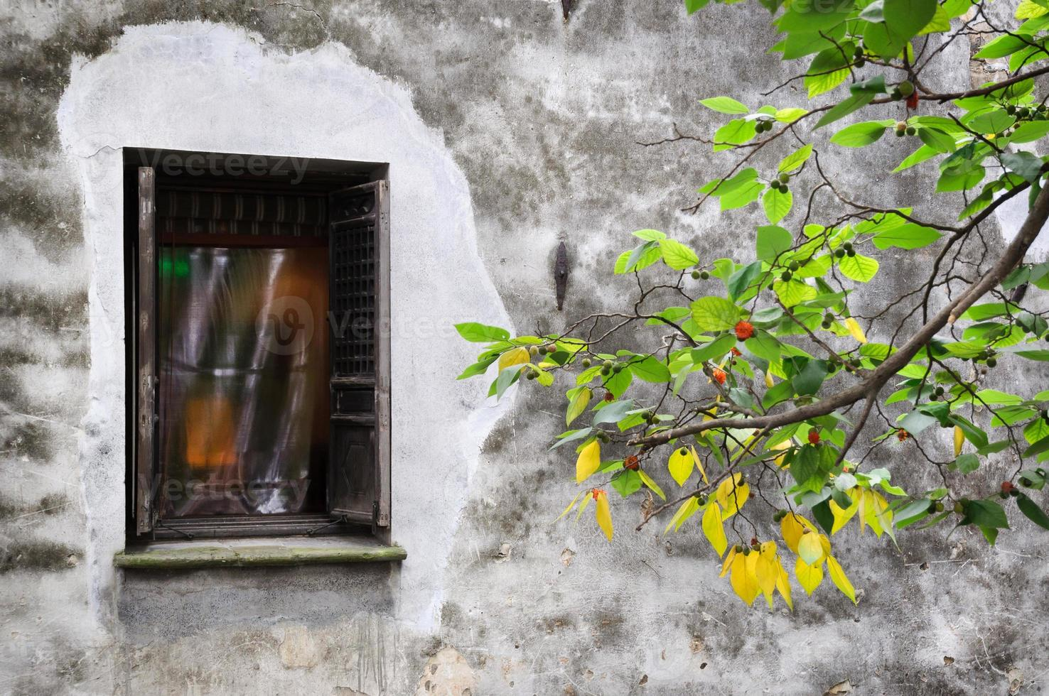 oude woningbouw en groene tak op pingjianglu, suzhou, china foto