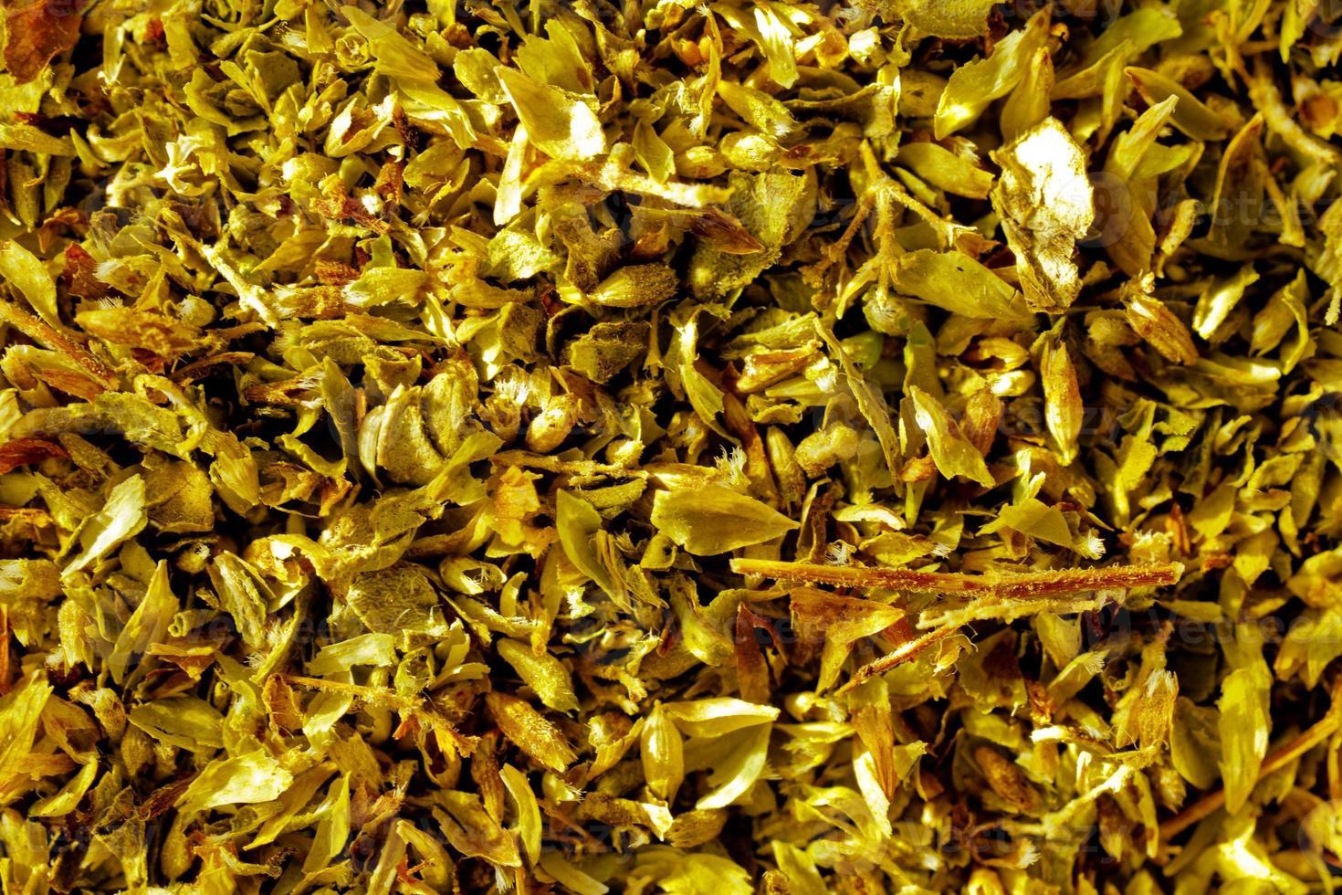 close-up van rozemarijnkruid in zonlicht foto