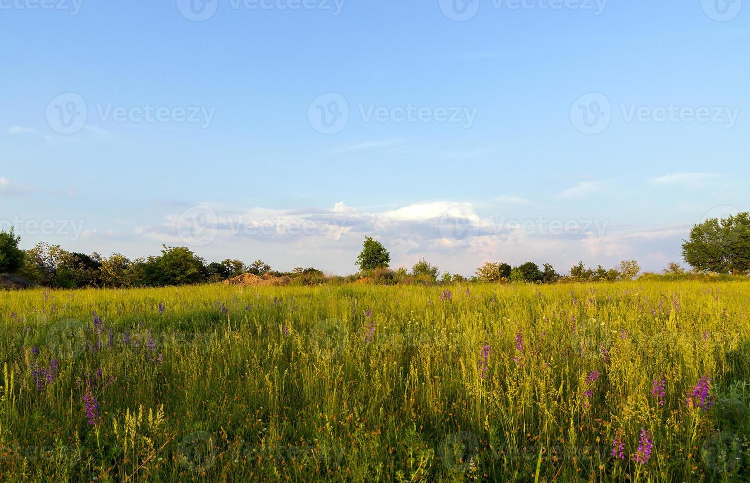 landschap tropisch foto