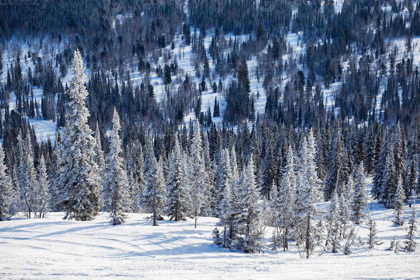 winter bos foto