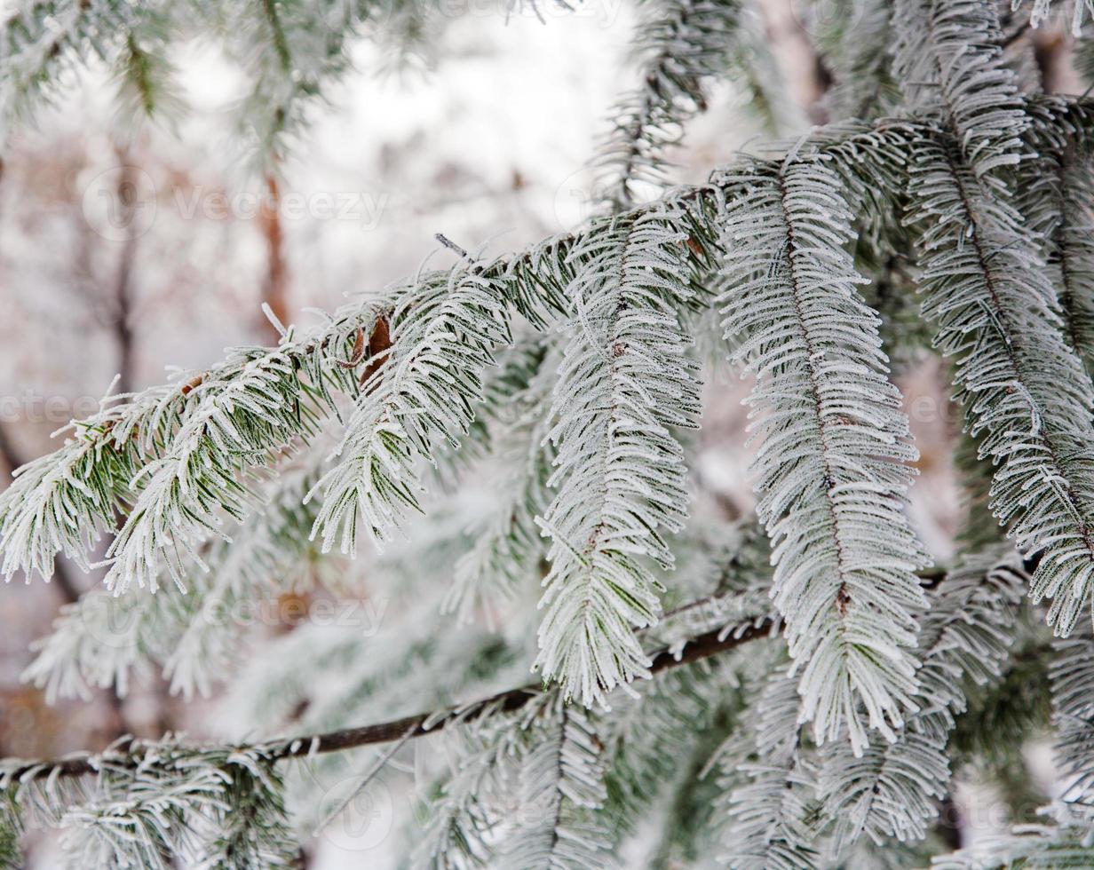 winter stemming foto