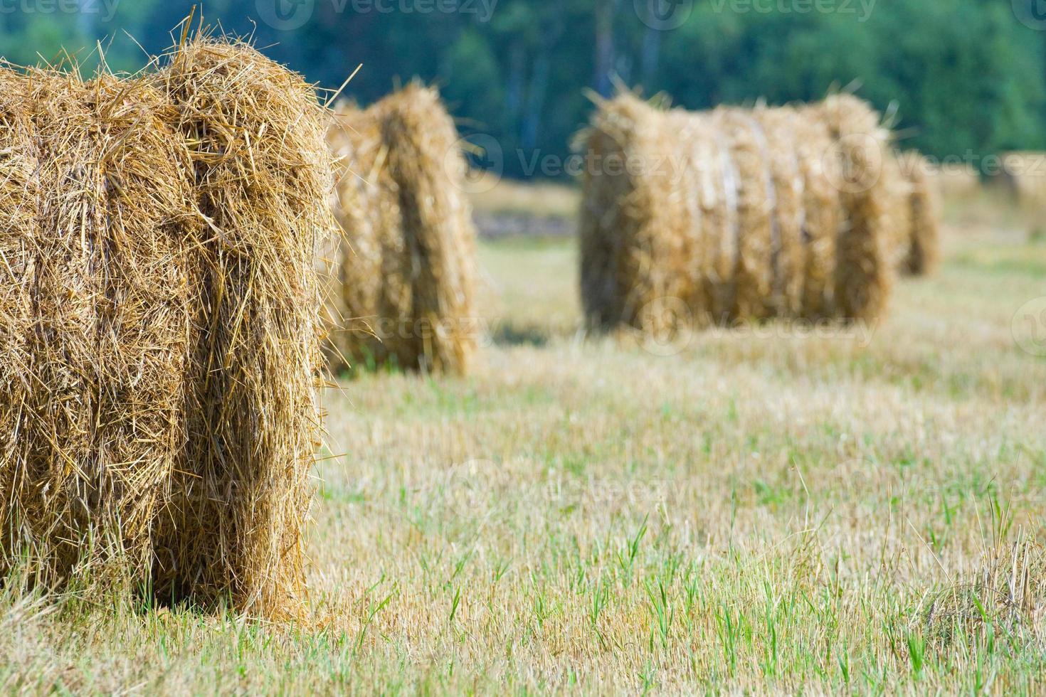 geoogste veld met strobalen in de zomer foto