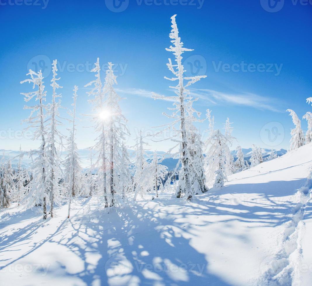 magische winter besneeuwde boom foto